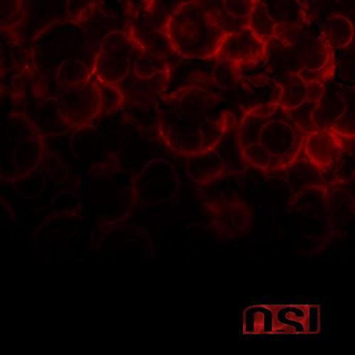 Alliance Osi - Blood