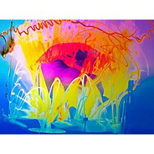 Frankie Kash Waddy's Drum Art Through My Eyes by SceneFour