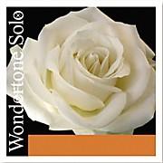Pirastro Wondertone Solo 4/4 Size Violin String