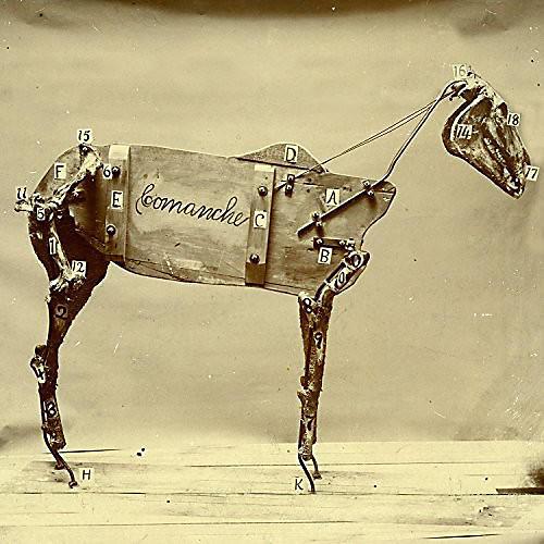 Alliance Chadwick Stokes - Horse Comanche