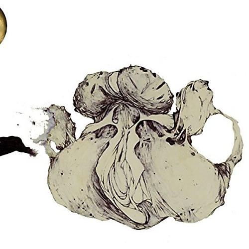 Alliance Coil - Ape Of Naples