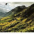 Alliance Woods - Songs of Shame thumbnail